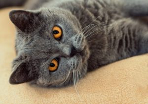 Terrified by pet cats Hypnotherapy Swords